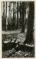 A Heavy Stand located at or near Camp 8, 1910