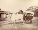 A bullock Shigram