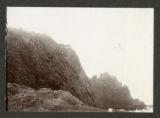Olearia chathamica, Veronica gigantes, Senecio huntii, Dracophyllum scoparium, Coriaria ruscifolia, Phormium tenax