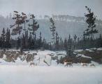 Caribou on Ice