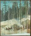 White-tailed Deer Duorama