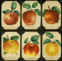 Apples #1 Plate Book