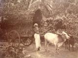 A Bullock Bandy, Ceylon.