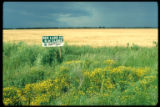 4-H sign, Red Lake County, Minnesota. Red River Valley, mature small grain field.