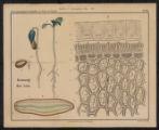 Wandtafeln für den Unterricht in der Pflanzenphysiologie an landwirthschaftlichen und verwandten Lehranstalten, No Cover