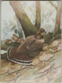 Box with Image on Lid: Ruffed Grouse