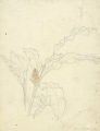 Plant and Hummingbird