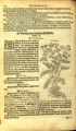 Achillea millefolium (Compositae)